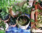 tips-merawat-tanaman-rangga-kusuma-living-loving-